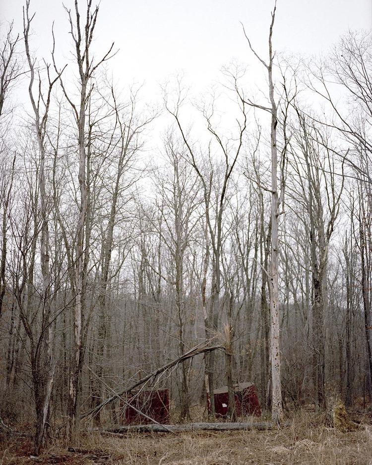 woodland1 001